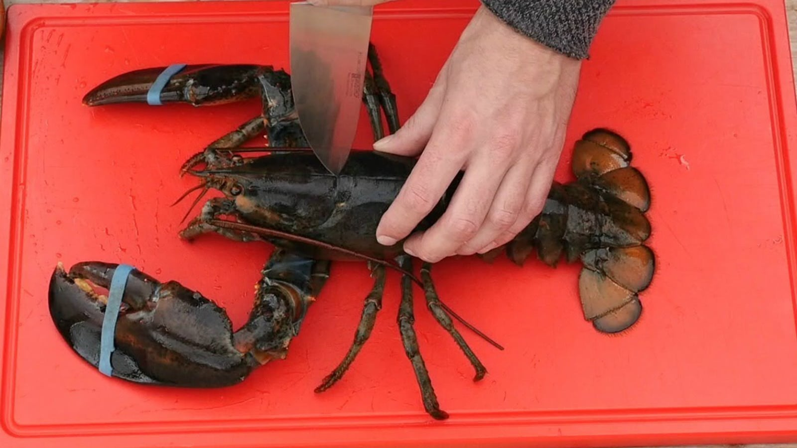 how-to-kill-live-lobster