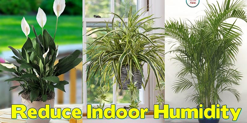reduce indoor humidity