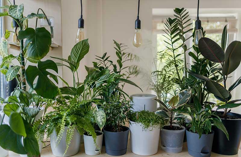 factors for indoor plant growth
