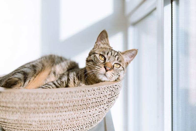 pet at home