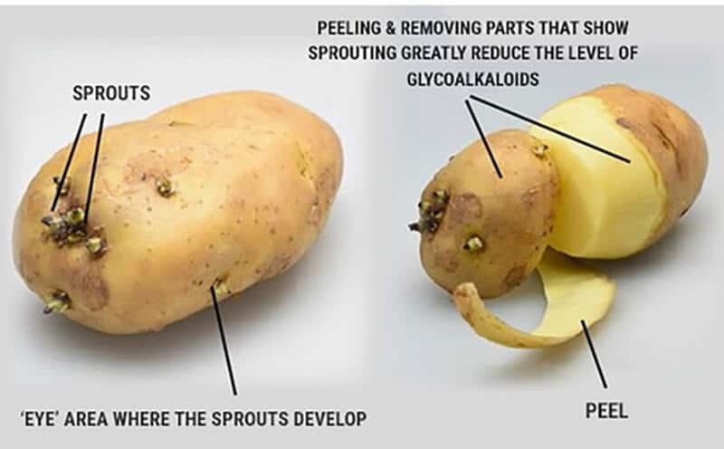 raw potatoes toxic substances