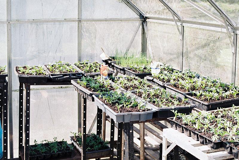 greenhouse inside humidity