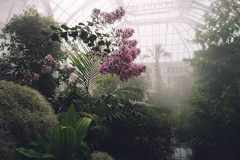 how to maintain greenhouse humidity level