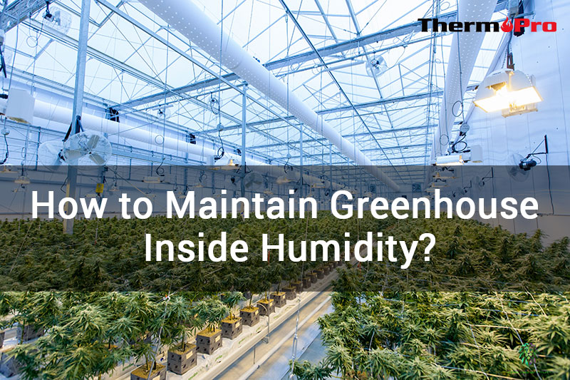 how to maintain greenhouse humidity